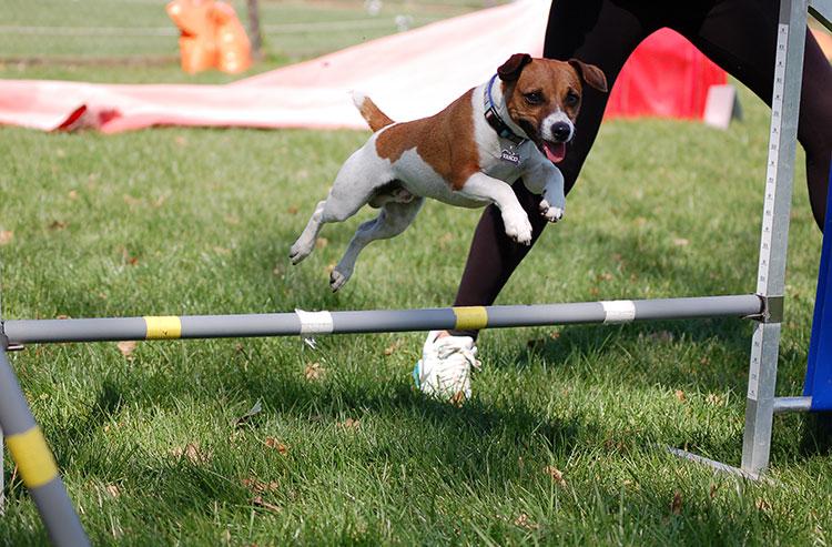 Corsi di Agility Dog