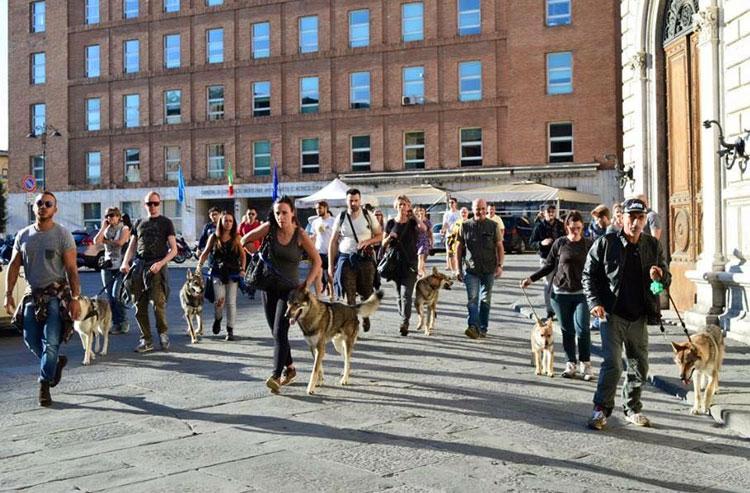 Corsi di Educazione cane in città