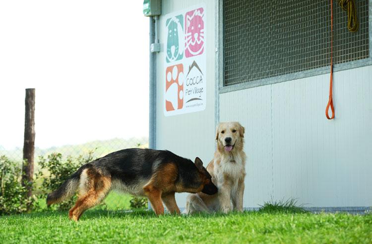 Personale qualificato curerà in ogni dettaglio il soggiorno del cane